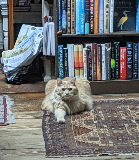 Bookstore Cat Savannah